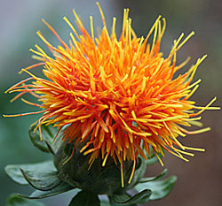 Is cla safflower oil a scam and full of side effects? read